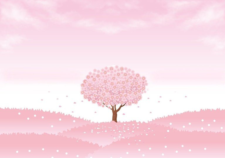 spring background, sakura tree, cherry tree